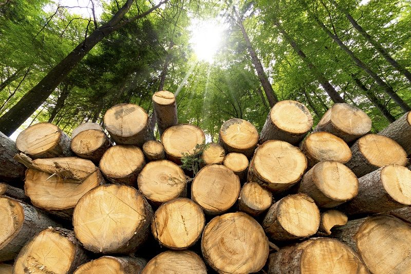 Wooden-Logs-with-Forest-on-Background-cm